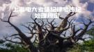 上海电大考场纪律与违纪处理规定
